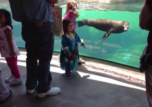 Прикольное видео с морским львом